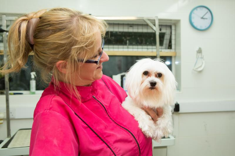 Dog Grooming Drove Vets Swindon